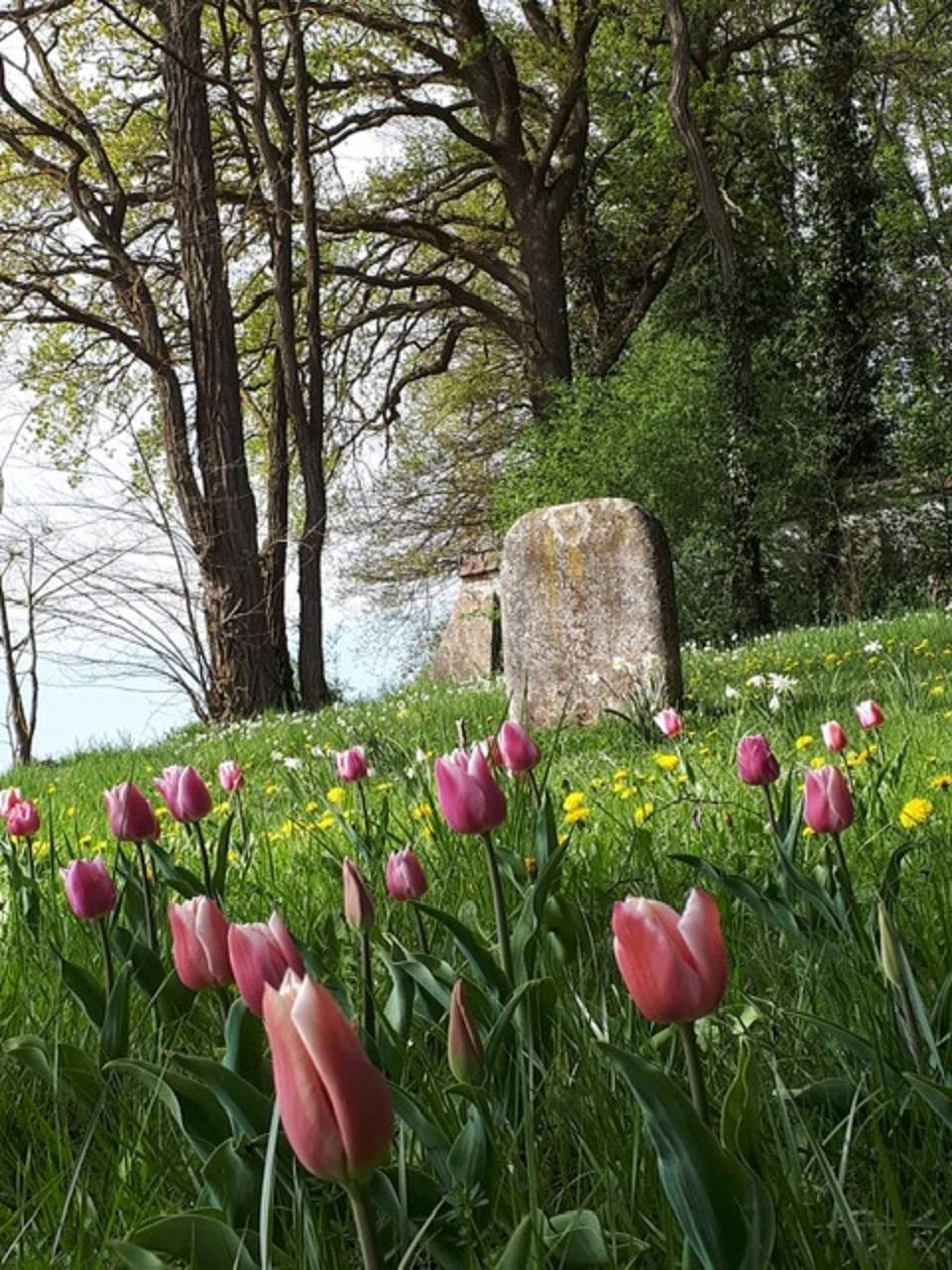 Pflanzaktion Judenfriedhof
